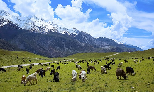 Chitral National Park - Photo by Tahsin A Shah1