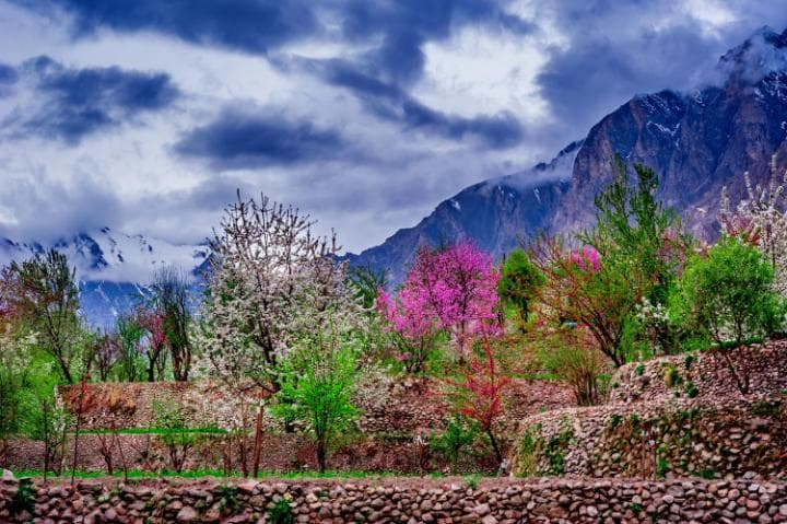 1 - Apricot and Cherry Treest Blossoming after Cold Winter Season in Hunza