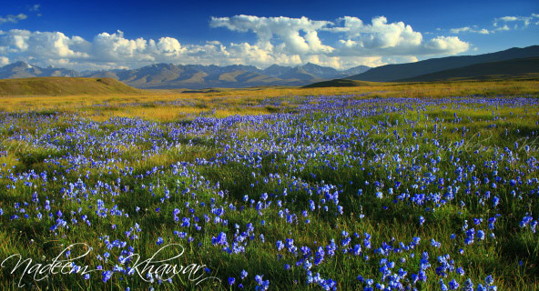 10 - Deosai Plains in Spring 1