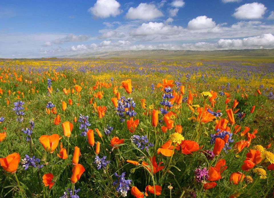 18 - Deosai Plains in Spring