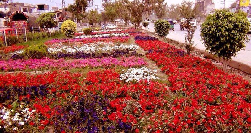 19 - Flowers Along Side a Road in Peshawar