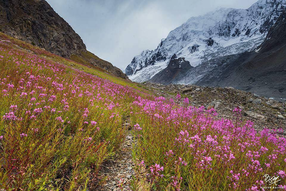 24 - Spring in Chitral Valley