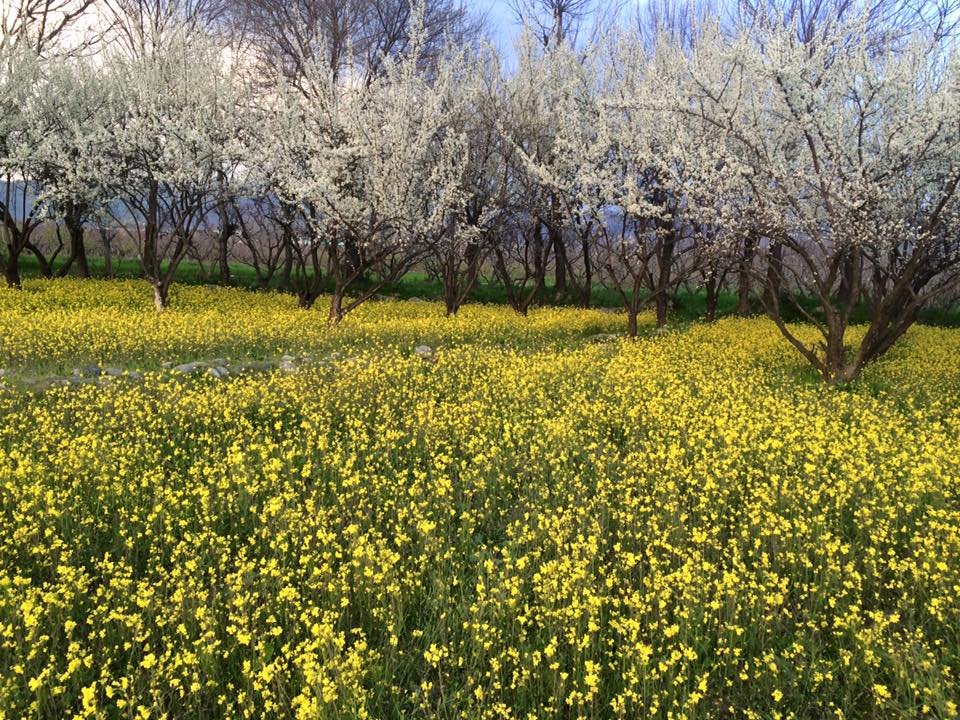 3 - Spring in Swat