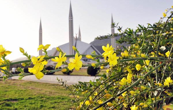 Flowers on green area in front of Faisal Mosque
