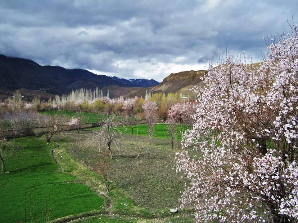 5 - Another Beautiful Picture of Spring in Chitral Valley