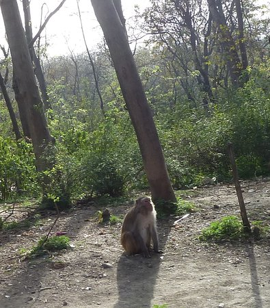 10 - Monkeys