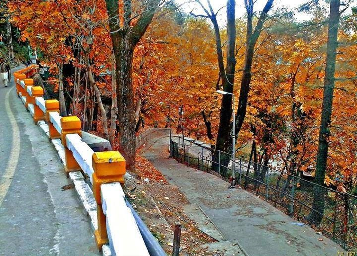 15 - This is what autumn looks like Murree