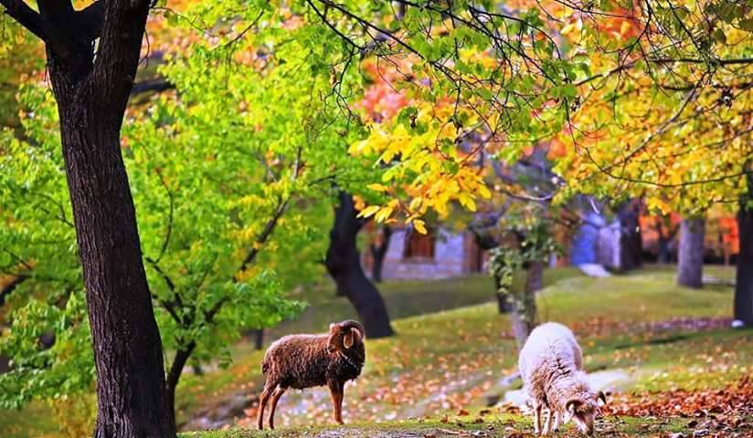 29 - Altit Royal Garden in Hunza