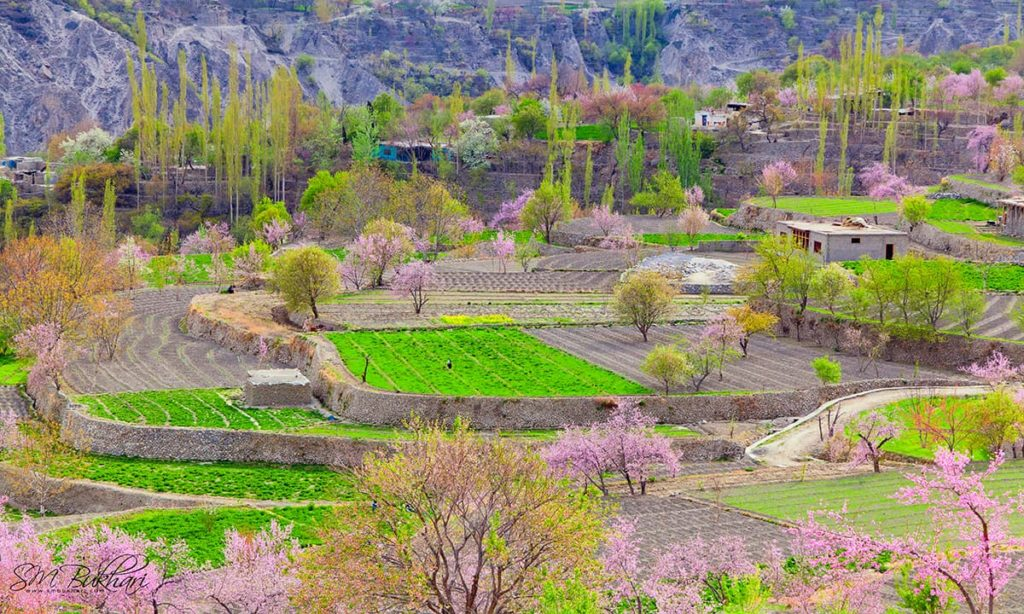 4 - Colors of Spring in Hunza