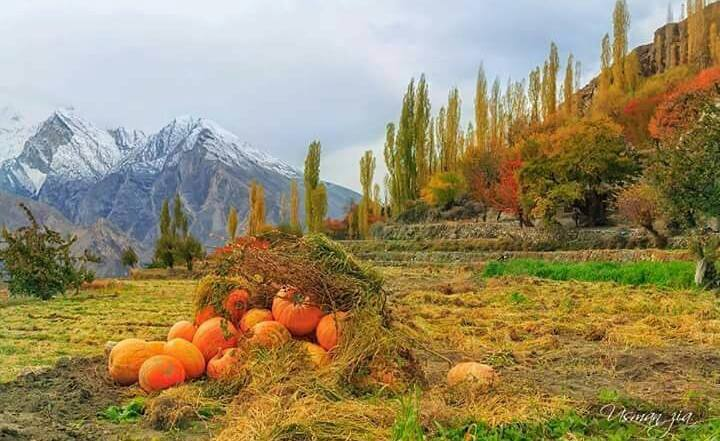 49 - Just some pumpkins lying around in Hunza, one of the most beautiful places of the world