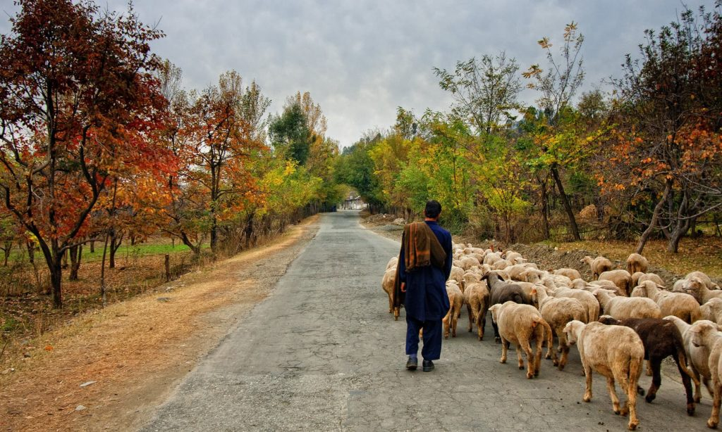 A Shepherd Boy Heading Home with his sheep