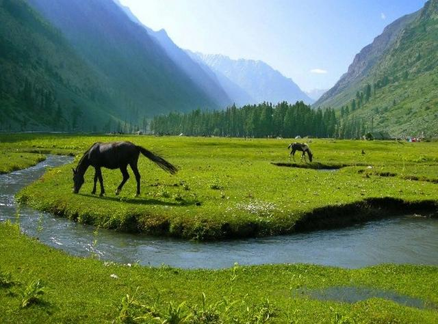 Green Fields and Horses
