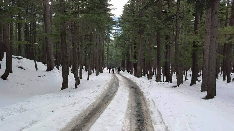 Ushu Forest - Kalam - Swat Valley - KPK