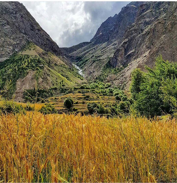 19 - Wheat Fields in Hushe Valley - Khaplu - Photo Credits - Husbaan Javed