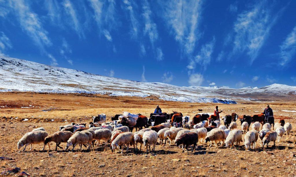 24 - Nomads of Deosai - S.M.Bukhari