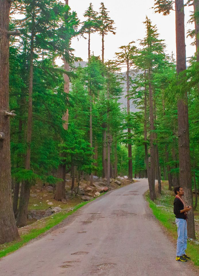 9 - Kalam Forest, Swat Valley