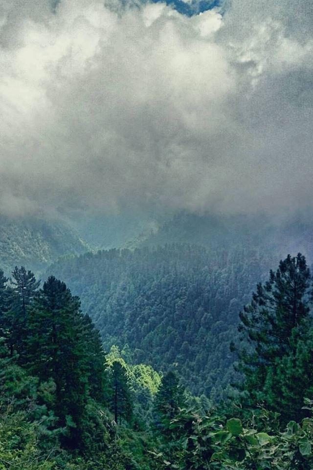 19 - Deep Jungles of Nathiagali, #KPK