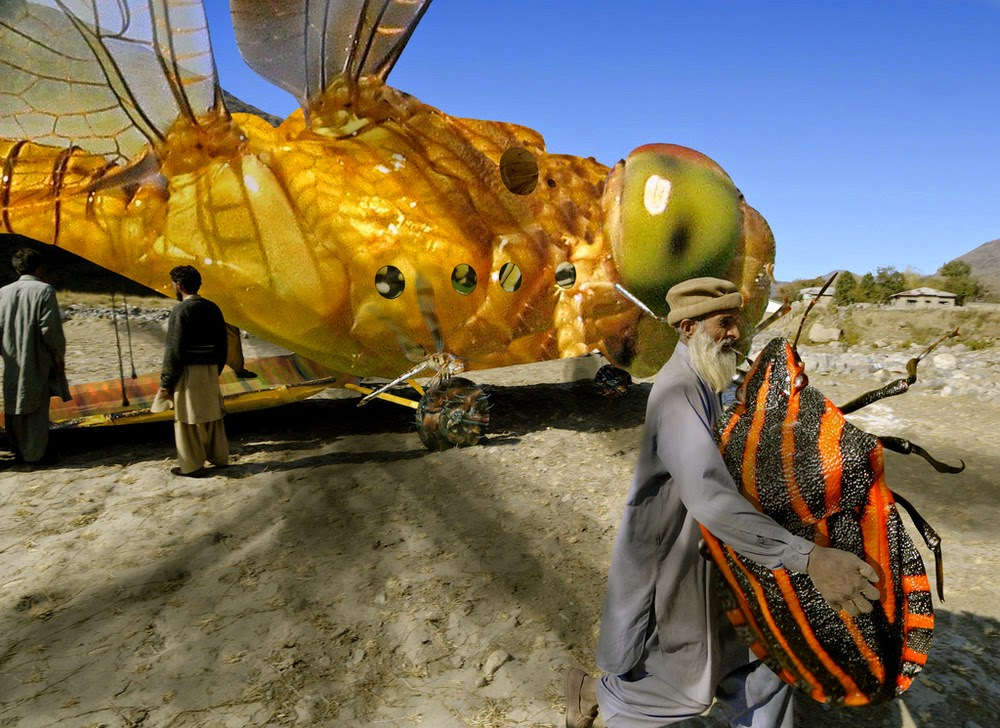 5 - Massive Dragonfly From Some Other Planet Lands Unexpectedly in Pakistan