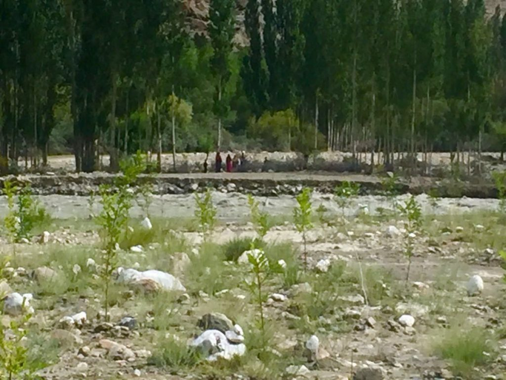 Billion Tree Tsunami at Work in Flood Plains of Chitral at Over 90000 Feet Elevation