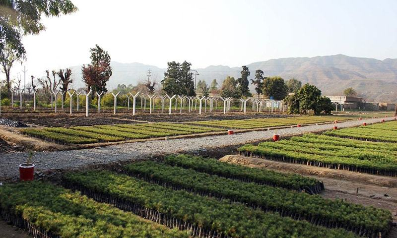 Government Run Tree Nursery in Haripur - Khyber Pakhtunkhwa